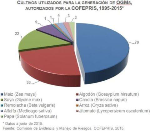 Grafica de cultivos OGM's